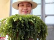 Khanh Hoa develops mariculture as key strategy