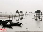 Clam farming in northern coastal district