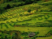 Beauty of Ta Leng golden terraces
