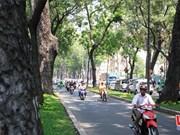 HCM City needs regular tree surveys