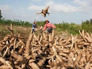 RoK company to build cassava processing factory in Cambodia