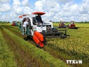 Can Tho, RoK association cooperate in rice production