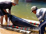 Khanh Hoa's fishermen trained to protect dolphins