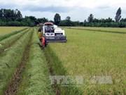 Large scale fields developed in northern region