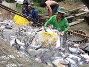 Tra fish exports estimated to increase 6.6 percent in 2016