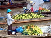 Can Tho to host int'l Mekong Delta agriculture festival