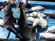 US increases tuna imports from Vietnam