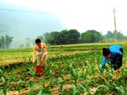 Yen Bai looks to diversify crops