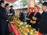 Luc Yen orange awarded collective trademark