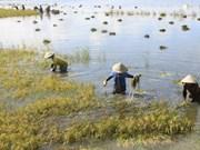 Mekong Delta region aims to fetch 15 billion USD from export