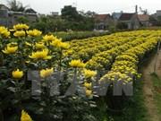 Floods drown Tet hopes of flower growers