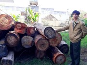 Timber smuggling worries Kon Tum