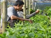 Phu Quoc develops hi-tech agriculture