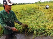 Southern farms suffer from abnormal rains