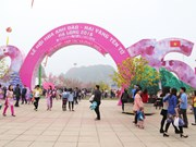Quang Ninh to hold cherry blossom festival next month