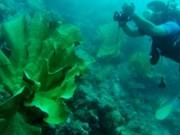 Indonesia, US cooperate in marine habitat conservation