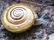 New snail species discovered in Thai province