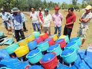 VietGap a windfall for shrimp farmers
