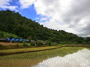 Thai rice still in global demand