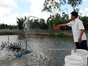 White-leg shrimp farming's profits lower than tiger prawn