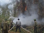 Ca Mau province prepared for forest fires