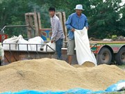 Thailand sells 1 million tonnes of rice at first bidding