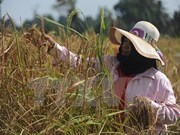 Thailand aims to export 10 million tonnes of rice in 2017