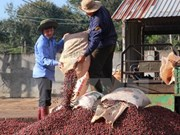 "Dak Lak strives to gain global recognition for ""Buon Ma Thuot Coffee"""