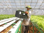 Agricultural sector pins hope on Japanese investment