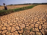 Southern region to see less drought, more rain in 2017 dry season