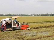 VN agricultural sector urged to modernise technology