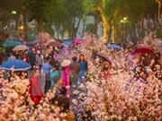 NA leader visits cherry blossom in Hanoi