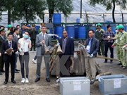 Over 100kg of suspected rhino horn seized in Hanoi