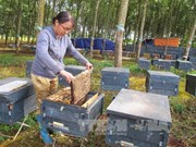 Commercial beekeeping - new source of income in Central Highlands