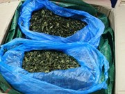 Nearly three tonnes of Khat leaves seized in Hai Phong port