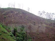 Dien Bien prosecutes deforestation cases in Muong Nhe