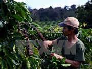Lam Dong looks to develop local coffee brand