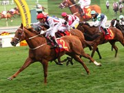New 70-ha racecourse opens in Lam Dong
