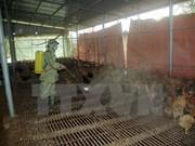 Ha Tinh announces new avian flu A/H5N1 outbreak