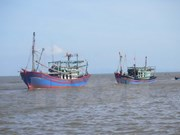 Thanh Hoa targets sustainable offshore fishing development