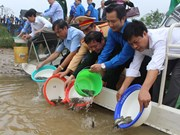 Young shrimps, fish released for aquatic resources