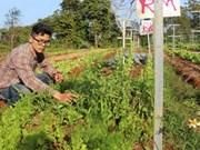 Vietnamese garden has Israeli roots