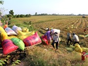 Land accumulation must benefit farmers: Deputy PM