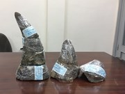 Five kg of rhino horn seized at southern airport