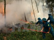 Central Highlands vigilant at forest fires during dry season peak