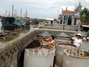 Nghe An builds seafood processing centres