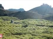 Tourism development prioritised in Son La
