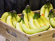 Vietnamese Camau Bananas exported to Dubai