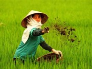 Sharp rise in fertiliser imports in first quarter