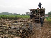 Indonesia targets to produce 1.2 million tonnes of sugar in 2017